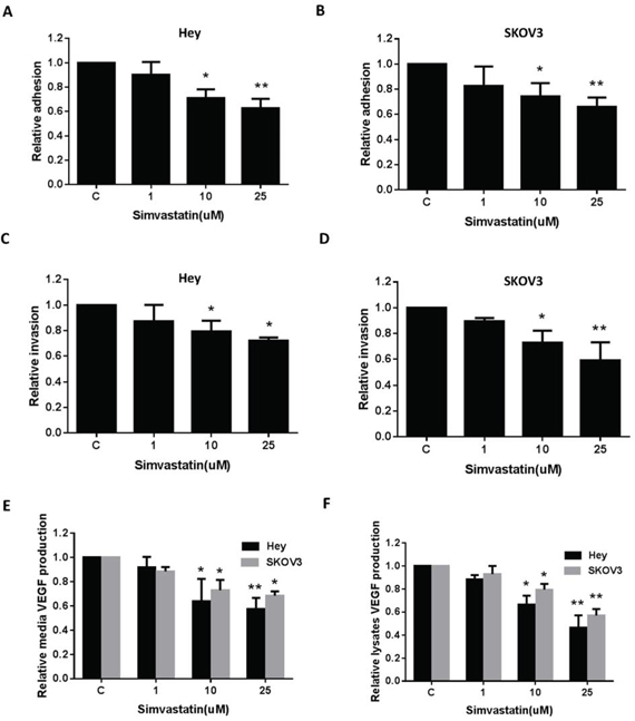Simvastatin reduced on adhesion and invasion in ovarian cancer cells.