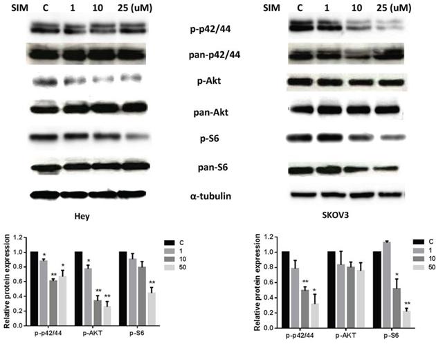 Simvastatin inhibited MAPK and AKT/mTOR pathways in ovarian cancer cells.