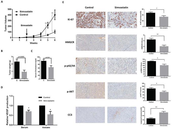 Simvastatin reduced tumor growth of orthotropic xenografts of serous ovarian cancer.