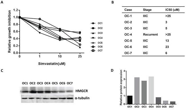 Simvastatin decreased cell proliferation in primary cultures of ovarian cancer cells.