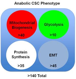 The anabolic CSC phenotype: Proteomics analysis.
