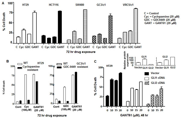 GLI is the critical target in switching off HH survival signaling.