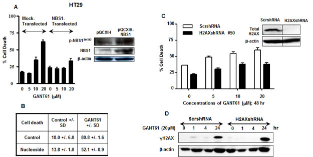 Effect of modulation of NBS1, nucleosides or H2AX during inhibition of HH signaling at the level of GLI.