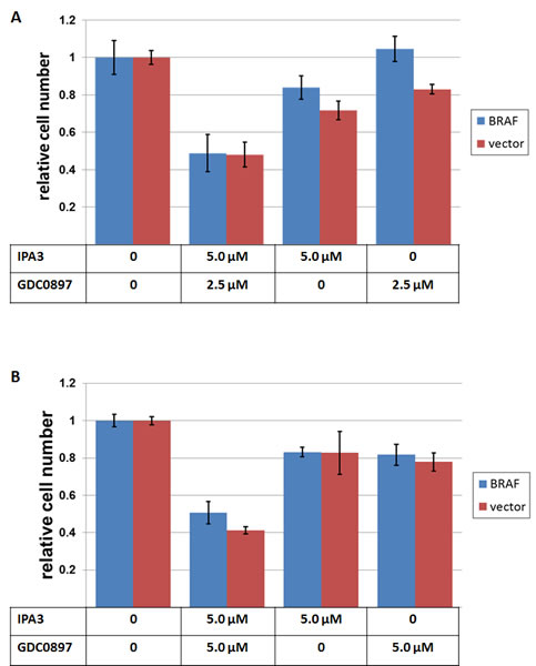 The effects of IPA3 and GDC-0897 on NRAS-mutated melanoma cell lines.