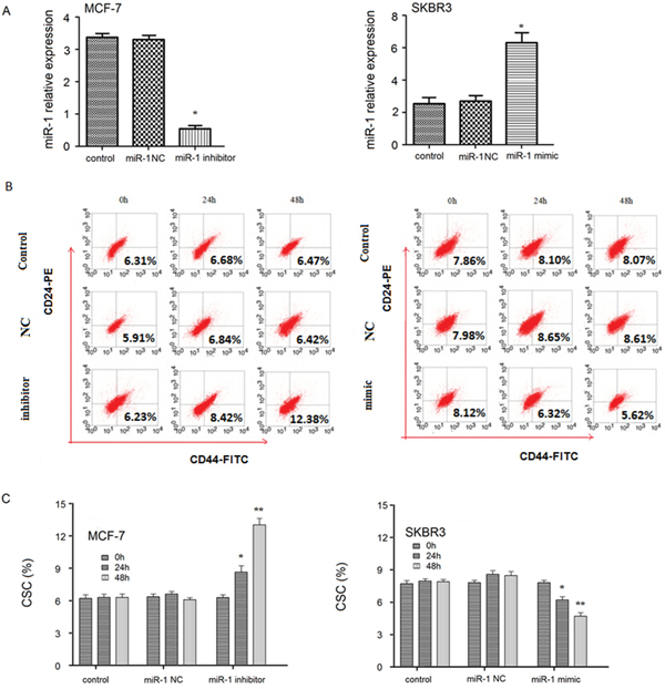 Altered miR-1 expression changes the percentages of breast CSC in breast cancer cell lines.