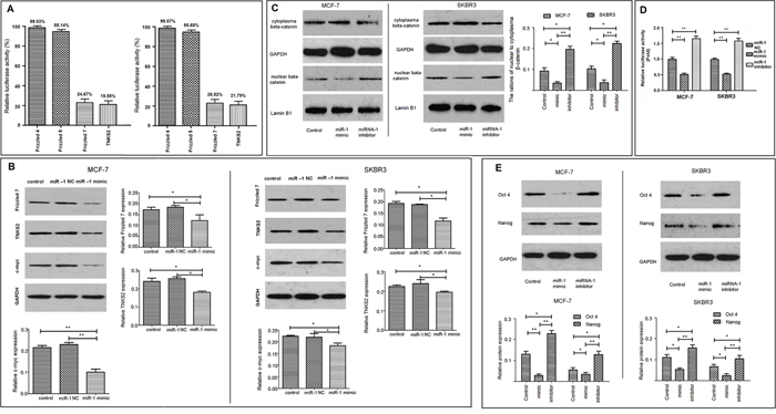 miR-1 inhibits the stemness of breast CSCs by targeting the Wnt/β-catenin signaling.