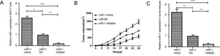 miR-1 inhibits the growth of implanted breast tumors in vivo.