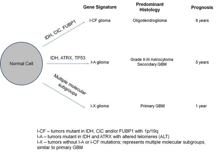 Model for molecular classification of gliomas.