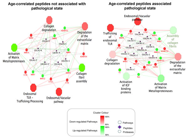 Molecular pathways associated with ageing.