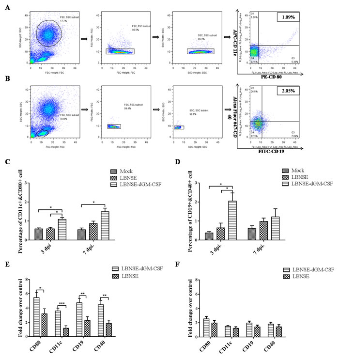 Measurement of DC and B cell activation in the peripheral blood after oral vaccination by flow cytometry and qRT-PCR.