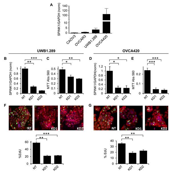 Endogenous SPINK1 expression drives proliferation of ovarian cancer cells.