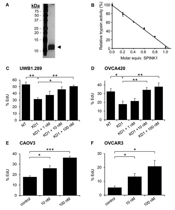 Recombinant SPINK1 stimulates proliferation of ovarian cancer cells.
