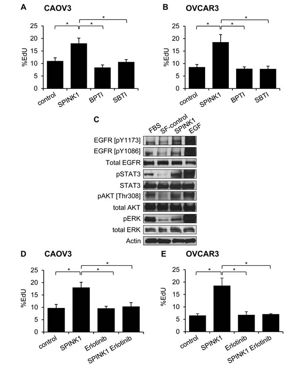 Molecular mechanisms of SPINK1-induced proliferation in ovarian cancer cells.