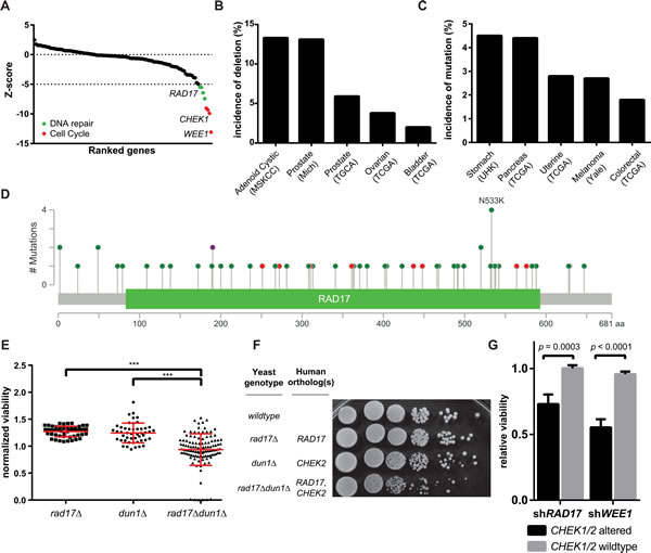 Chemogenetic profiling identifies synthetic lethal interactors with AZD7762.