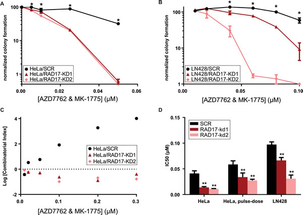 Dual inhibition with AZD7762 and MK-1775 results in synergistic toxicity in