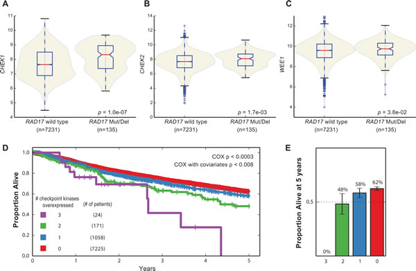 Synthetic lethal interactions with checkpoint kinases in human tumor samples.