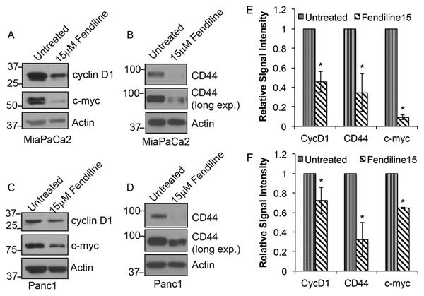 Fendiline inhibits expression of c-Myc, cyclin D1 and Cd44: MiaPaCa2