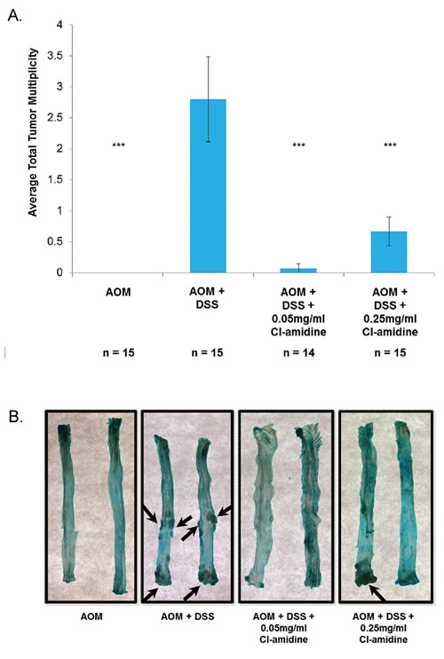 Tumor multiplicity is reduced in the colons of mice treated with Cl-amidine.