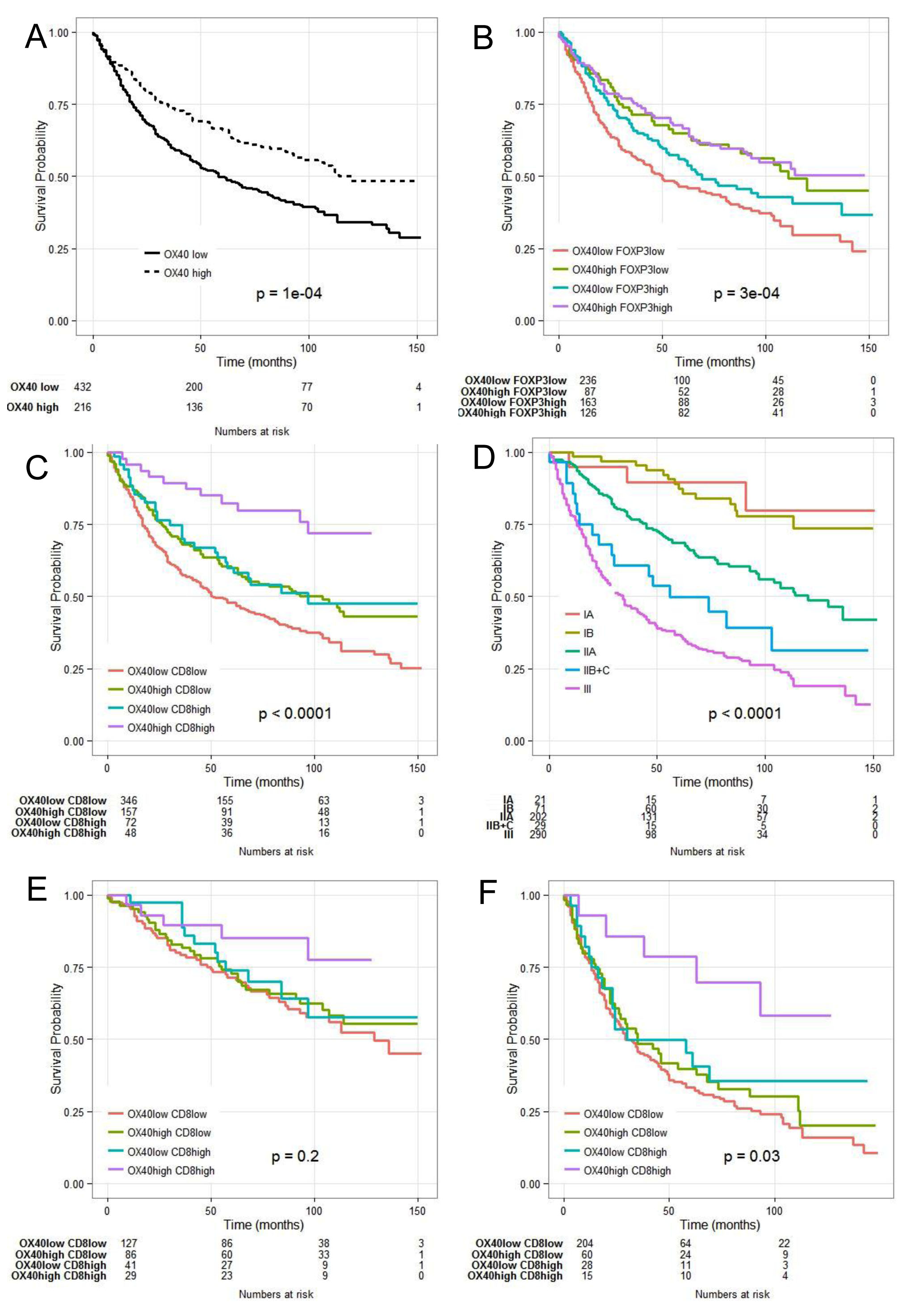 Combined Kaplan- Meier analysis of OX40+ and CD8+ infiltration results in enhanced prognostic significance in CRC.