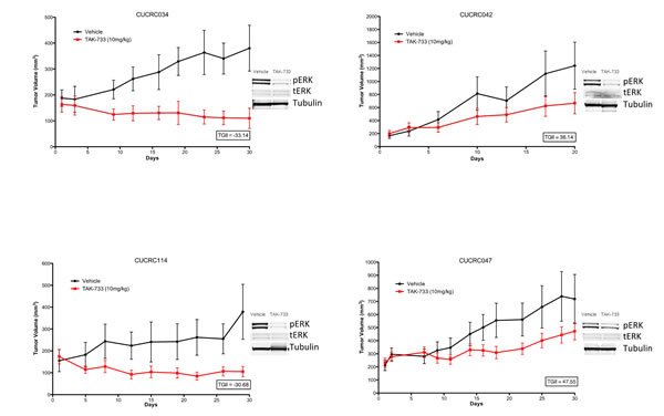 Individual growth curves of 2 sensitive and 2 resistant CRC patient-derived tumor explants (PDX) showing decreases in pERK in TAK-733 treated explants.