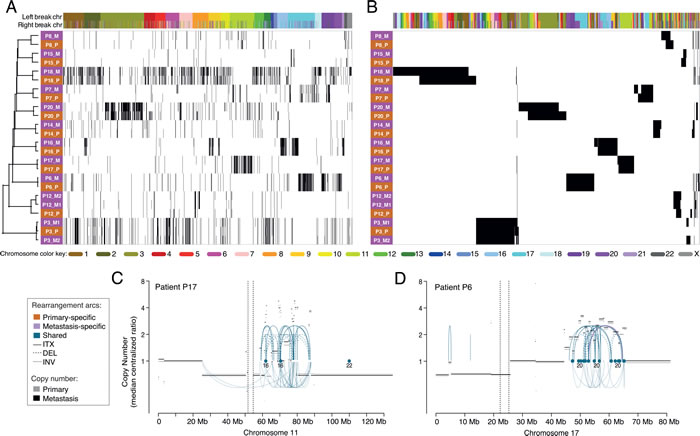 Hierarchical clustering of primary and metastatic breast tumors using all enumerated chromosomal rearrangements.
