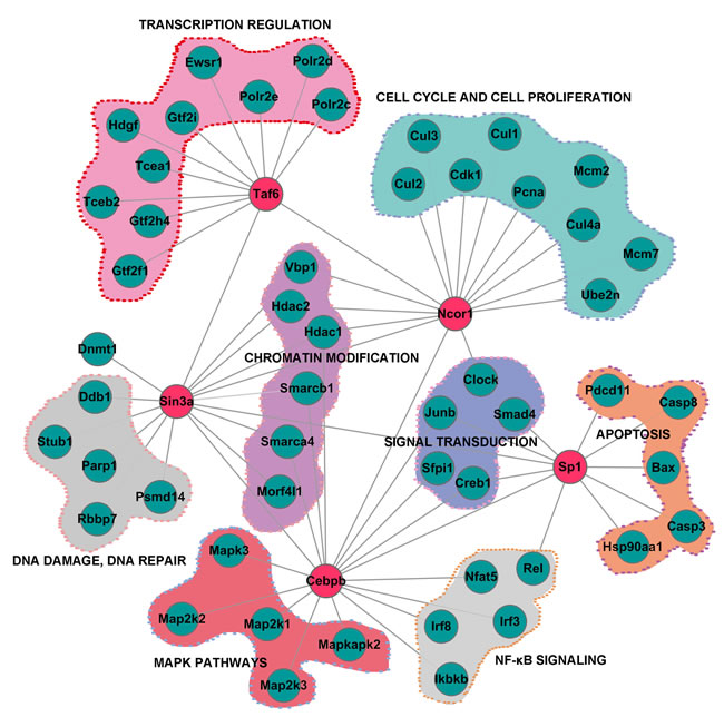Subnetwork constructed by data-dependent network analysis of proteins involved in different biological processes.