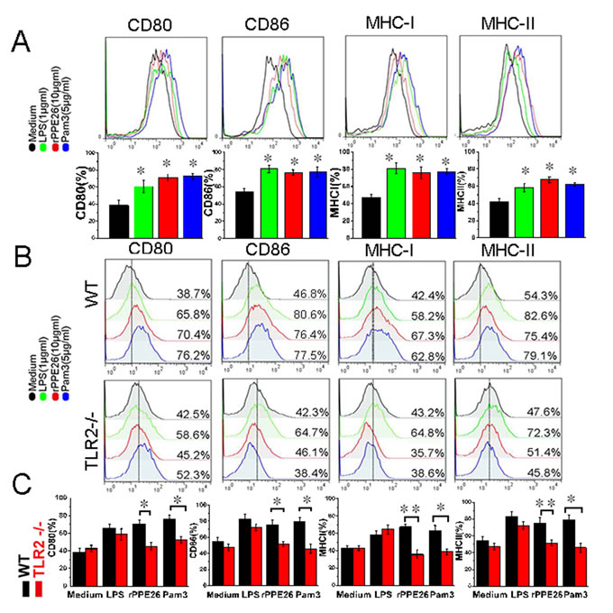 PPE26 enhances the expression of MHC molecules and co-stimulatory on macrophages via TLR2.