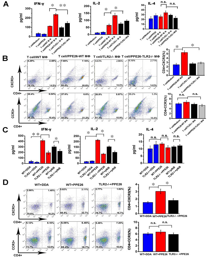 PPE26 induces a Th1-type immune response via TLR2-dependent macrophage activation.