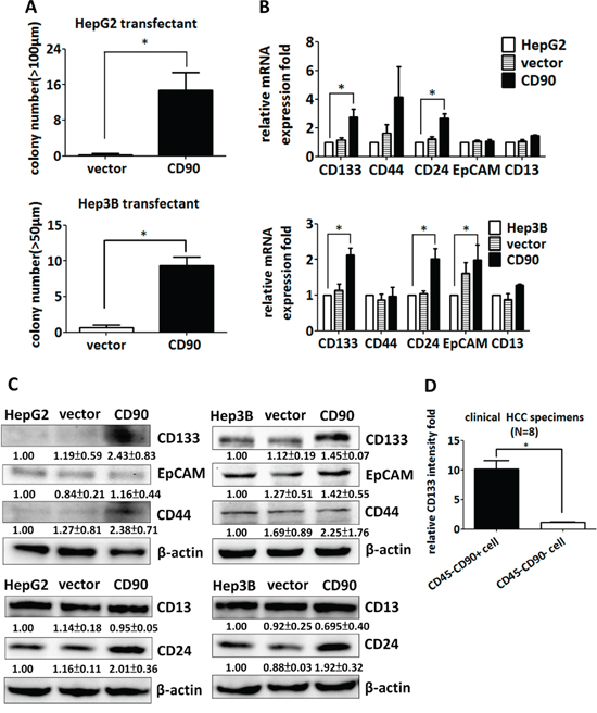 CD90 increases sphere formation and the expression of cancer stem cell markers in cell lines and tumor specimens.