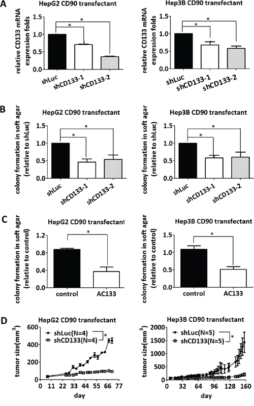 Inhibition of CD133 attenuates the anchorage-independent growth induced by CD90.