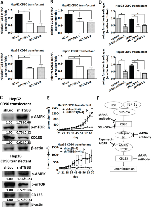 Silencing of β3 integrin inhibits tumor formation and CD133 expression induced by CD90.
