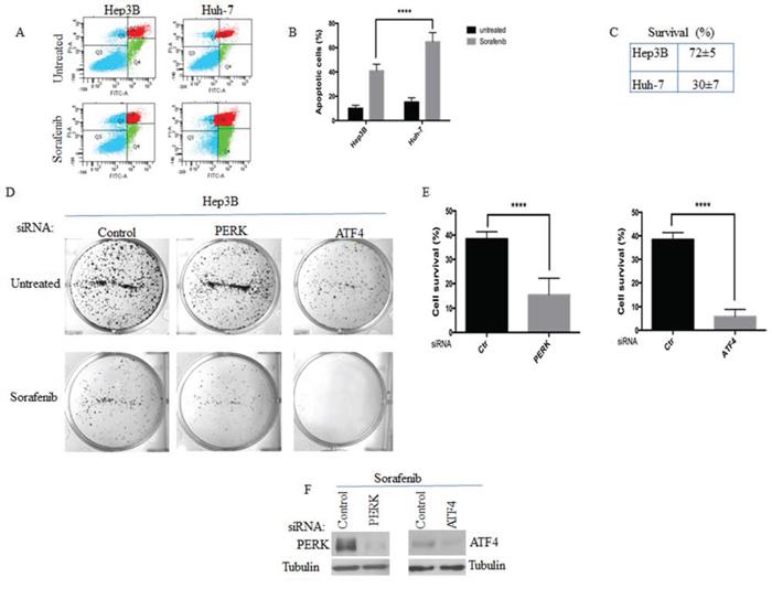 The activation of PERK-P-eIF2α-SGs pathway correlates with HCC resistance to sorafenib.