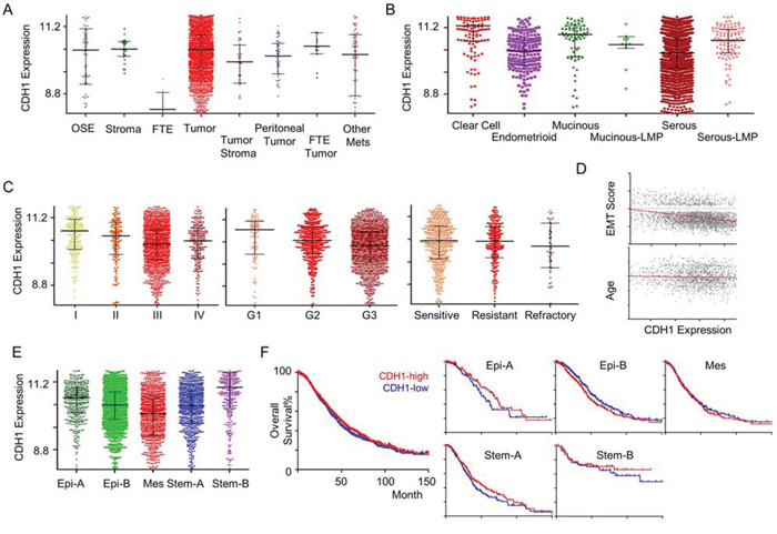 CDH1 gene expression in ovarian cancer.