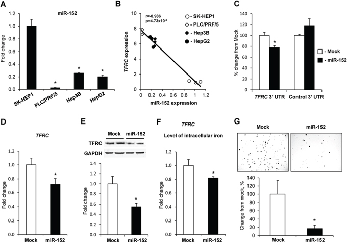 Regulation of TFRC expression by miR-152.