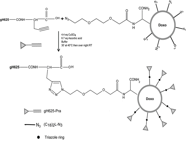Scheme of the functionalization reaction of gH625 to LipoDoxo.