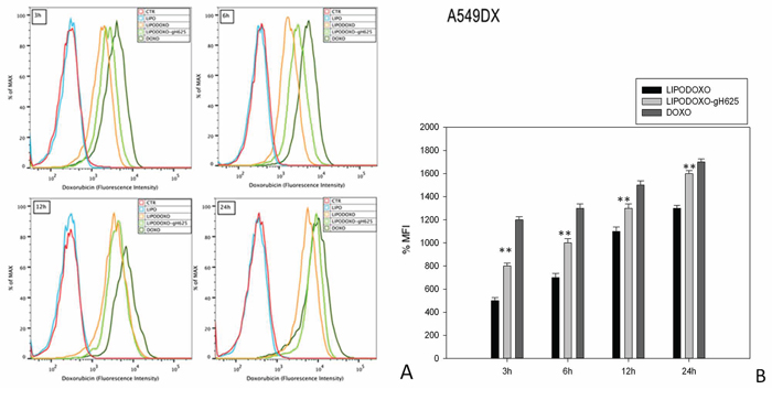 Doxorubicin accumulation in A549 Dx cells after 3, 6, 12 and 24 h of treatment with LipoDoxo, LipoDoxo-gH625 and Doxo.
