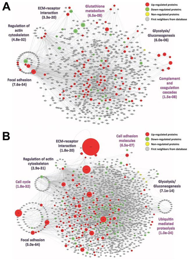 Interaction networks of the identified
