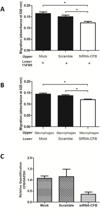 CFB knockdown decreased the migration of skin-derived epidermoid carcinoma (A431) cells and reduced the chemotaxis of human macrophages.