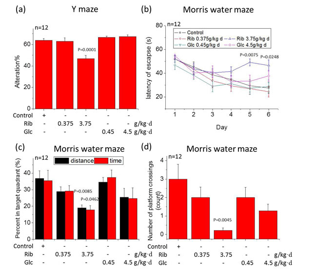 Reduced spontaneous alteration in the Y maze test and impaired spatial memory in Morris water maze in mice gavaged with D-Ribose.