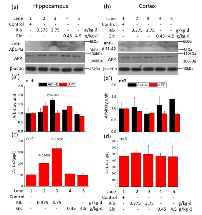 Changes in amyloid-β (Aβ) like product levels in the brain of sugar-treated mice.