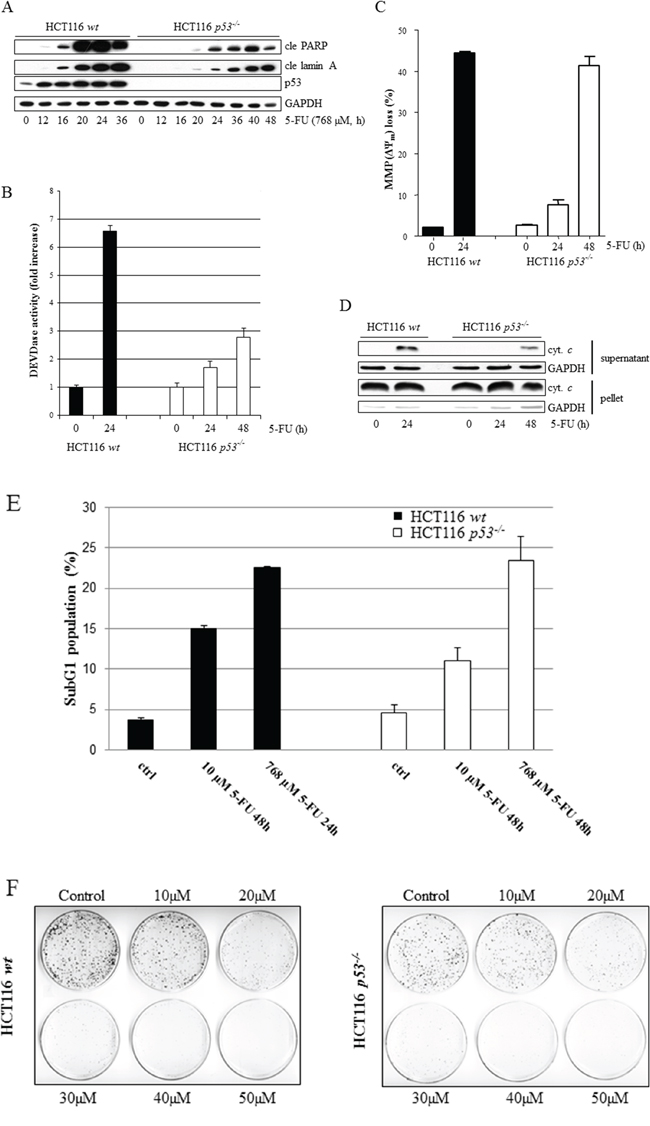 Comparative analysis of 5-FU-induced apoptosis in wt and p53-deficient HCT116 cells.