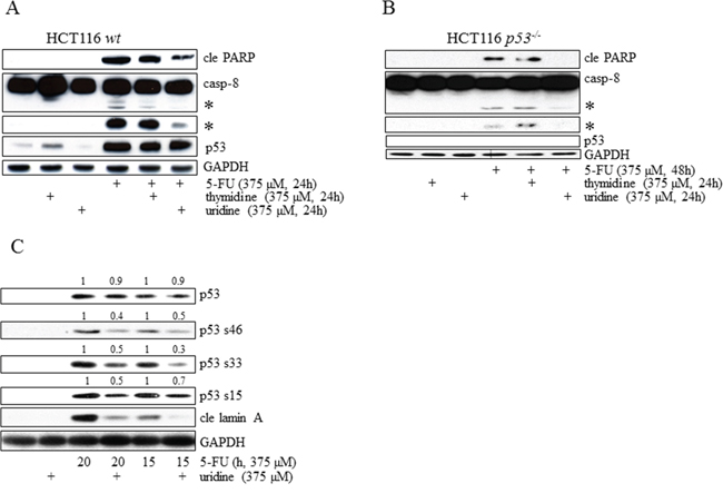Irrespectively of p53 status, induction of apoptosis in HCT116 cells occurs as a consequence of 5-FU-mediated RNA-stress.