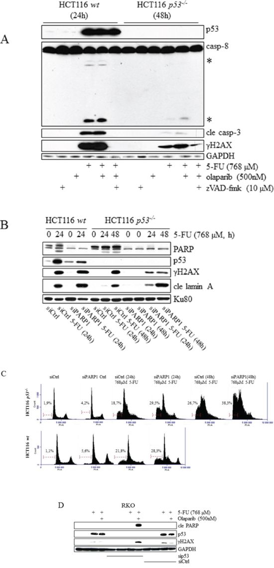 Sensitization of tumor cell lines to 5-FU by chemical and RNAi-mediated inhibition of PARP occurs specifically in the absence of p53.
