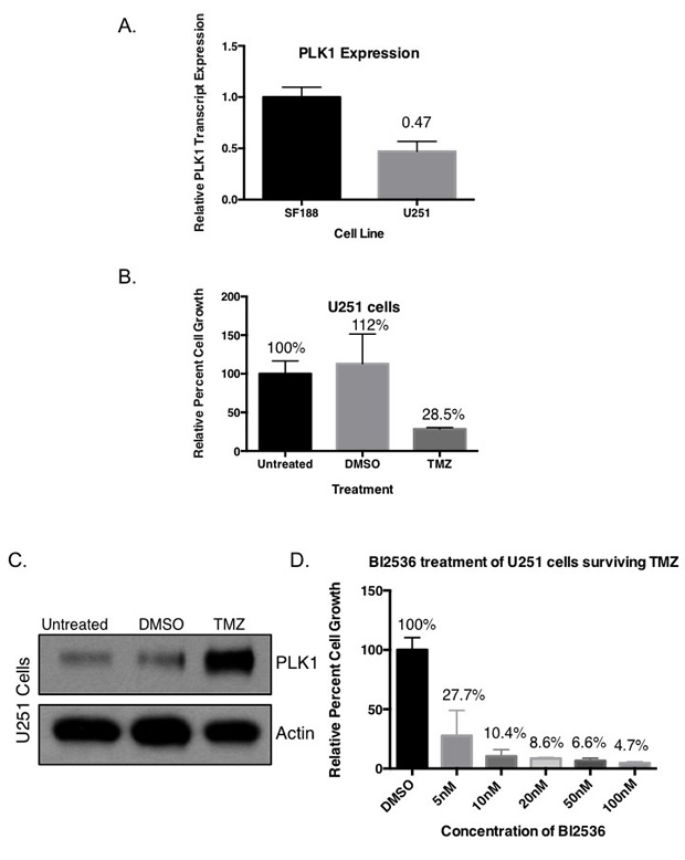 Targeting PLK1 inhibits growth of drug resistant cells with upregulated PLK1 protein.