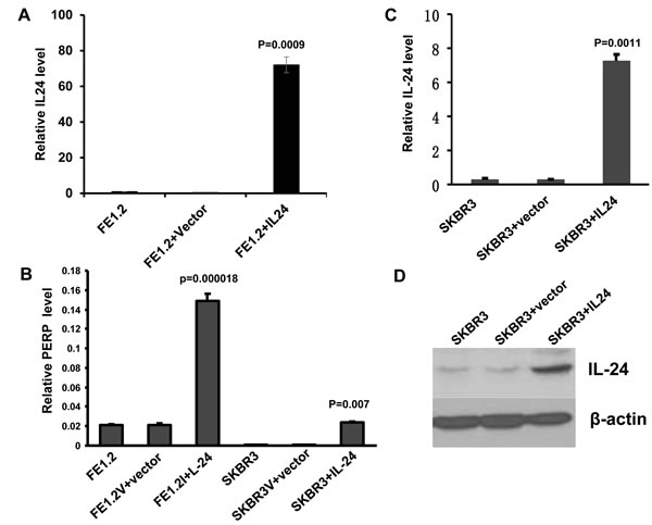 MDA-7/IL-24 directly induces PERP transcription.