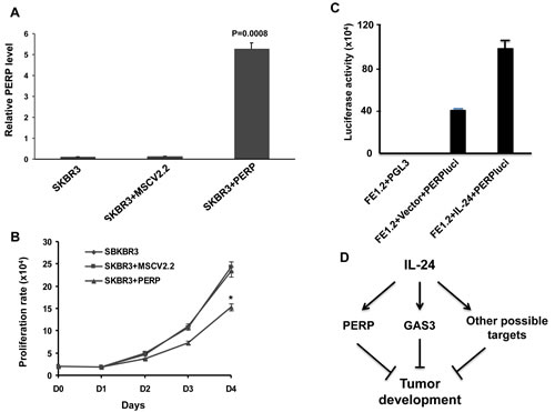 MDA-7/IL-24 regulates PERP expression.