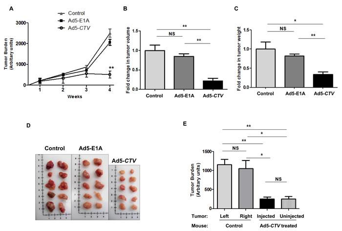 MDA-7/IL-24 inhibits tumor growth in MMTV-PyMT transgenic mice.