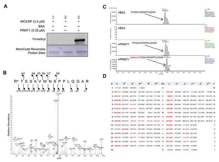 PRMT1 methylates INCENP