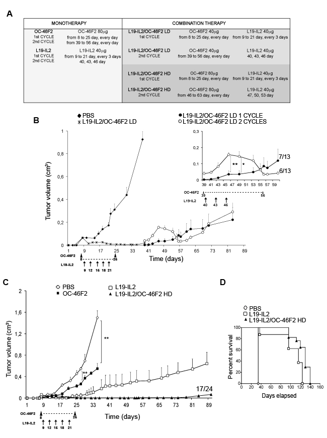 Targeting Syndecan-1 by scFv OC-46F2 enhances the therapeutic efficacy of immunocytokine L19-IL2 in melanoma.