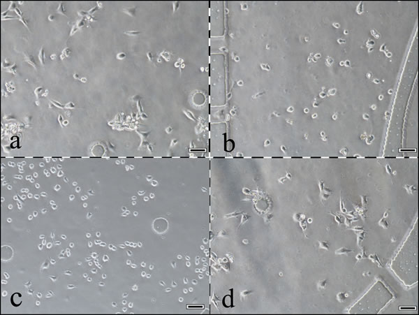 A photograph of cells growing in the 4 chambers of this system.